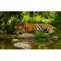 тигр, скачать картинки и обои на рабочий стол