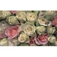 Розы обои (133 шт.)