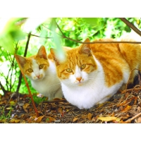 Котейки обои (48 шт.)