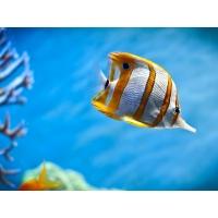 Рыбки обои (4 шт.)