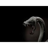 Змеи обои (5 шт.)
