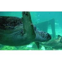 Черепахи обои (5 шт.)