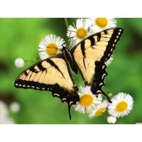 Бабочка обои (12 шт.)