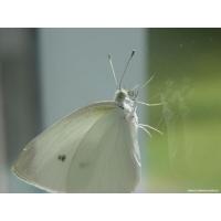 Бабочки обои (24 шт.)
