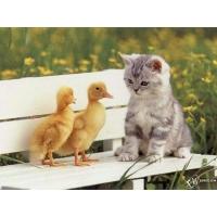 Котенок обои (5 шт.)
