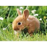 Кролики обои (24 шт.)