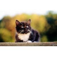 Кот обои (28 шт.)