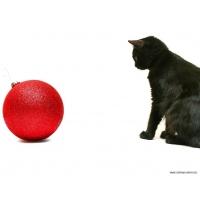 Коты обои (130 шт.)