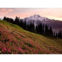 Ледянной пик и розовый горный вереск, картинки и обои, поменять рабочий стол