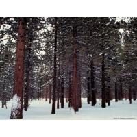 Леса обои (53 шт.)