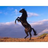 Лошади обои (84 шт.)