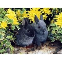 Зайцы обои (11 шт.)