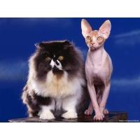 Кошки обои (173 шт.)
