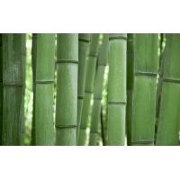 Бамбук обои (7 шт.)