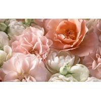 Чайная роза картинки, картинки и оформление рабочего стола windows