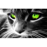 Коты обои (4 шт.)