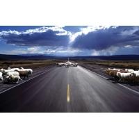 Овцы на дороге картинки, скачать бесплатно картинки и обои