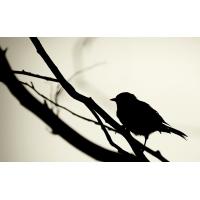 Птицы обои (53 шт.)