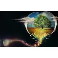 Любовное дерево картинки, картинки и обои на креативный рабочий стол