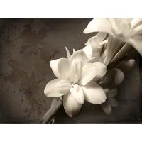 Белый цветок картинки, картинки и качественные обои на рабочий стол