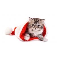 Новогодний  подарочек - картинки, заставки на рабочий стол бесплатно