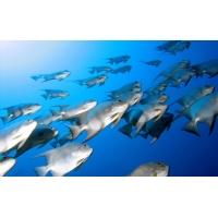 Рыбы в голубой воде - обои для рабочего стола