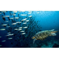 Черепаха и рыбки - картинки на рабочий стол и обои