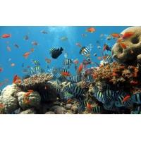 Ассорти под водой - картинки и обои скачать бесплатно на рабочий стол