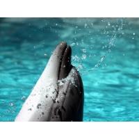 Красавец Дельфин - картинки бесплатно на рабочий стол и обои
