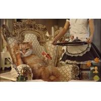 Деловой кот - обои и фото на красивый рабочий стол скачать