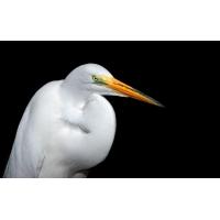 Крупная белая птица - картинки, обои, заставка на рабочий стол компьютера