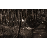 Бамбуковый лес - лучшие обои для рабочего стола и картинки