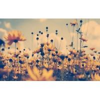 Желтые цветочки - красивое фото на рабочий стол и картинки