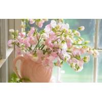 Цветы на окне - картинки и новые обои на рабочий стол