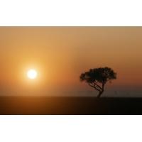 Дерево на фоне калифорнийского заката - картинки и качественные обои на рабочий стол