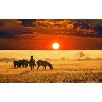 Зебры в вечерней саванне - фотографии на рабочий стол