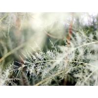 Зима - обои скачать бесплатно и фотографии