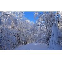 Зимняя сказка - обои на рабочий стол бесплатно и картинки