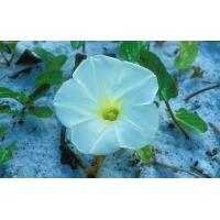 Цветок на снегу - бесплатные картинки и обои на рабочий стол