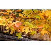 Интересные листья - картинки и широкоформатные обои для рабочего стола