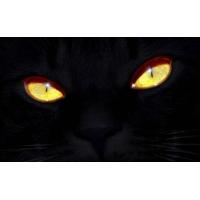 Черная кошка - картинки и обои на рабочий стол компьютера скачать бесплатно