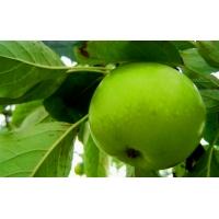 Кислое яблочко - скачать обои для рабочего стола и картинки