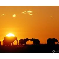 Слоны обои (9 шт.)