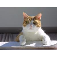 Чудной кот - картинки, фото на прикольный рабочий стол