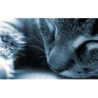 Спящий кот - картинки и широкоформатные обои для рабочего стола