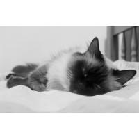 Сладких снов - картинки, обои, заставка на рабочий стол компьютера