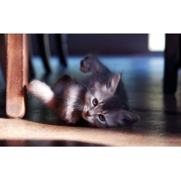 Котенок под стулом - картинки, обои на новые рабочие столы