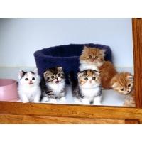 Разноцветные котята - скачать обои, гламурный рабочий стол