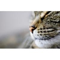 Кошачья мордашка - скачать красивые обои для рабочего стола