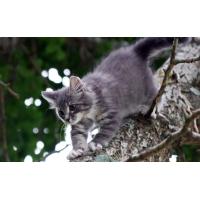 Кот на дереве - лучшие обои для рабочего стола и картинки